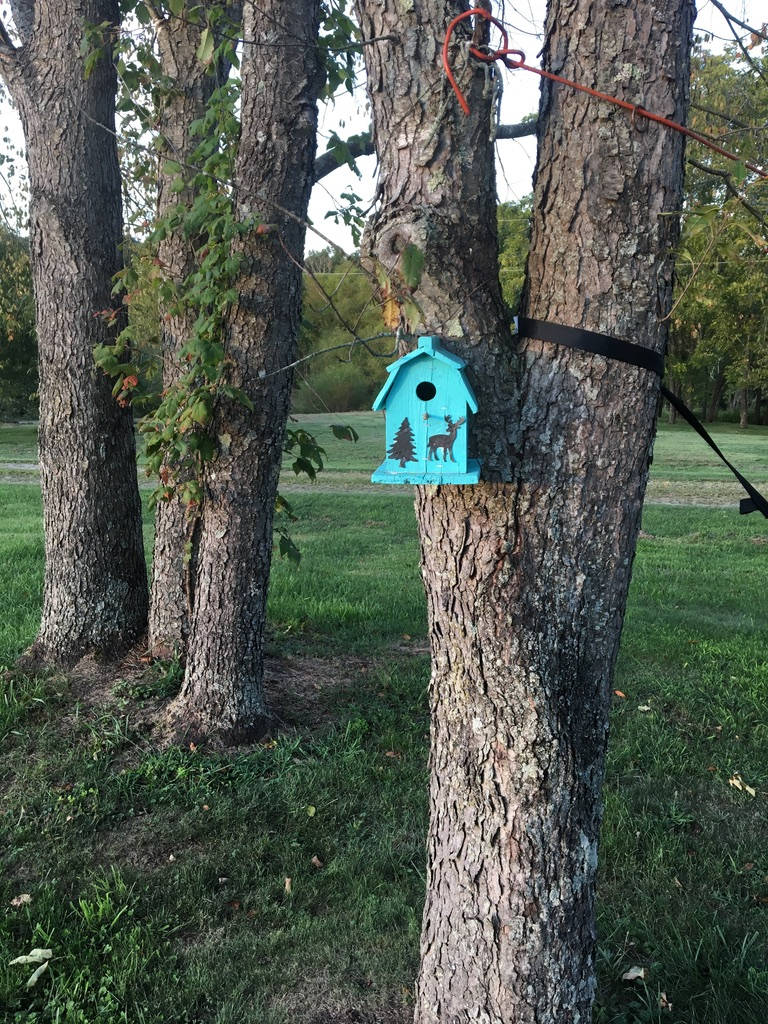birdhouses and bikes